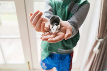 Young Boy Holding Onto A Pet Mouse Inside