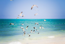 A Flock Of Seabirds Flying Ove...