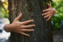 Hands Touching A Tree In The F...