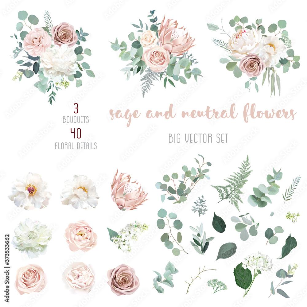 Fototapeta Pale pink camellia, dusty rose, ivory white peony, blush protea