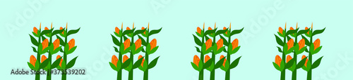 Fotografía set of corn stalk cartoon icon design template with various models