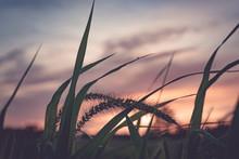 Detail Of Field Grass Set Agai...