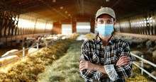 Portrait Of Caucasian Happy Woman In Medical Mask Standing In Stable With Sheep And Looking At Camera. Beautiful Female Farmer At Sheep Farm. Barn With Cattles During Coronavirus Pandemic.