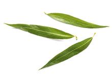 Green Osier Leaves On White Ba...
