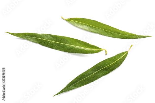 Green osier leaves on white background Fotobehang