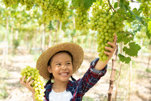 Grape Farm. Small Family Business. The Child Worked Happily On The Farm. A Young Asian Woman Held A Large Bunch Of Grapes In Her Hand And Was Choosing Green Grapes On The Vine In The Vineyard..