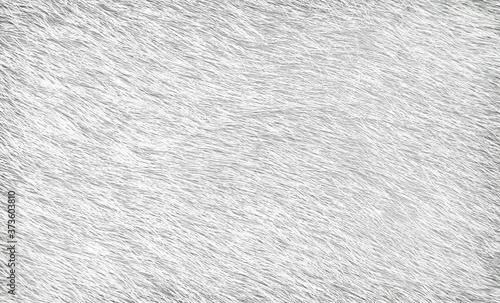 Tela Gray cow fur texture abstract , animal skin patterns background