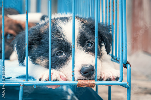 Photo Cute puppy in a cage at an animal shelter. Dog shelter.