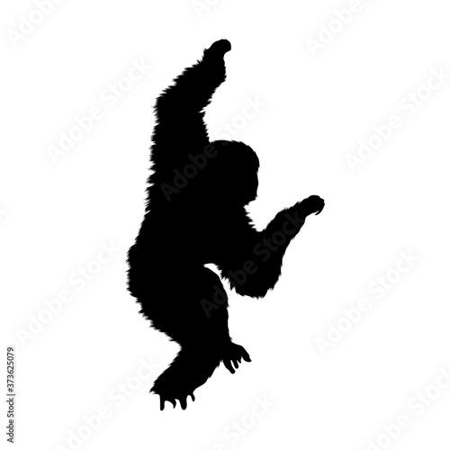 Fotografia Gibbon (Hylobatidae) Silhouette Found In Map Of Asia