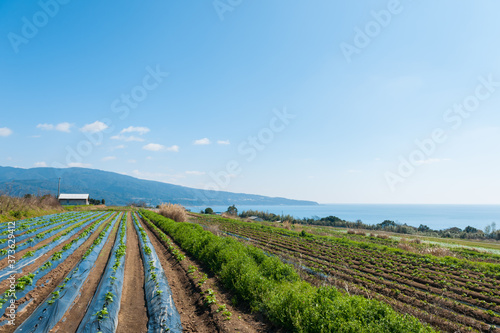 Fotografie, Obraz 雄大な台地と太平洋の眺望
