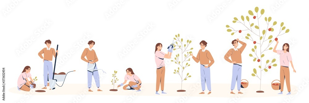 Fototapeta Set of couple planting and caring of tree stages vector flat illustration. Man and woman seedling, cultivation and collecting harvest isolated on white. Concept of collaboration and environment care