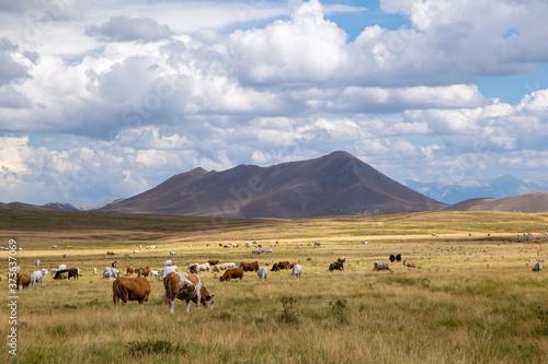 Valokuva campo imperatore gran sasso national park