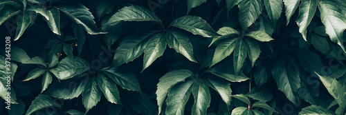Fotomural Creative layout made of green leaves. Nature background