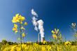 canvas print picture - Kohlekraftwerk mit Kühlturm und Raps im Vordergrund