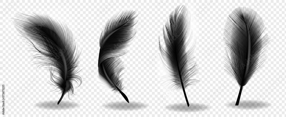Fototapeta Black bird fluffy feather