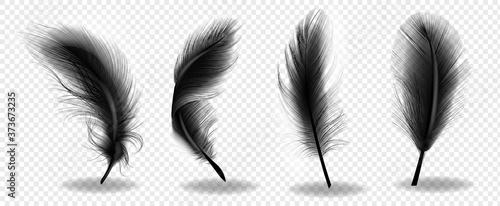 Fotografie, Obraz Black bird fluffy feather
