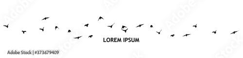Fotografia A flock of flying birds. Vector illustration