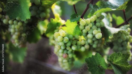 Foto Wein