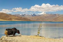 Lhasa, Tibet, China, Nangartse County, Shannan Prefecture,  Stop At The Yamdrok Lake, Panoramic View Of The Lake And The Surrounding Mountains