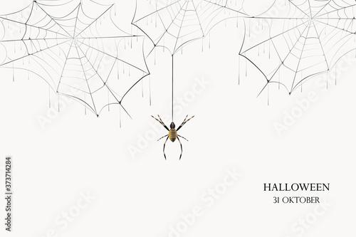 A black spider hangs on a web Fotobehang