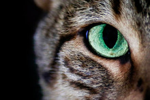 Green Cat's Eyes Glowing In Th...