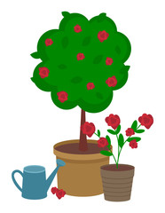 Red rose round bush with large pot and bouquet of red roses in a small pot. Watering can for flowers. Growing roses, plants. Urban agriculture and gardening. Isolated vector illustration on white