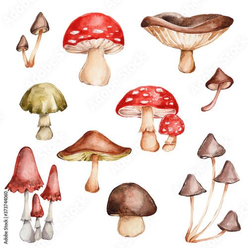 Fototapeta Mushrooms set; watercolor hand draw illustration; with white isolated background obraz