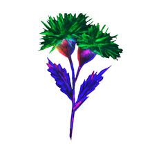 Thistle, Wildflower, Flowering...