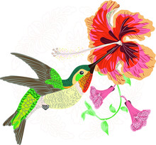 Hummingbird And Hibiscus Trump...