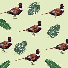 Wild Pheasants Birds Farm And ...