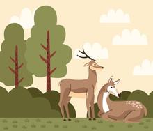 Wild Reindeer Animals In The C...