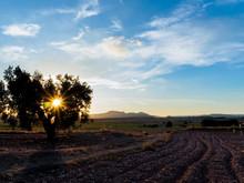 Atardecer En Paisaje Agrícola Con Siluetas De árbol Y Montañas Con Nubes De Formas Estéticas.