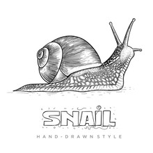 Vector Snail In Hand Drawn Style. Realistic Animal Illustrations