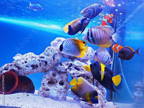 Photo Tropical fish in aquarium