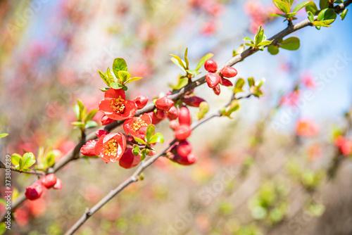 유혹적인 빨간 꽃 Fototapet