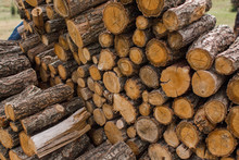 Wooden Logs Lie In A Huge Pile