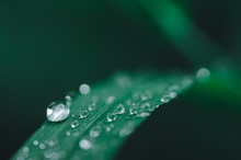 Water Droplets Background On Dark Green Leaves