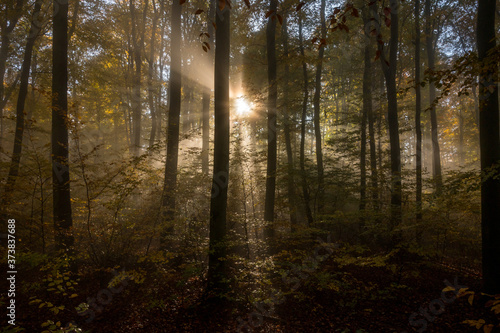 Fototapeta Odenwald on a foggy Morning