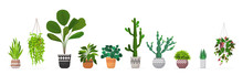 Set Decorative Houseplants Pla...