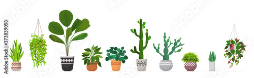 set decorative houseplants planted in ceramic pots different garden potted plant Fotobehang