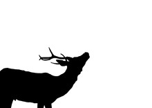 Illustration Cerf Brame Animal...