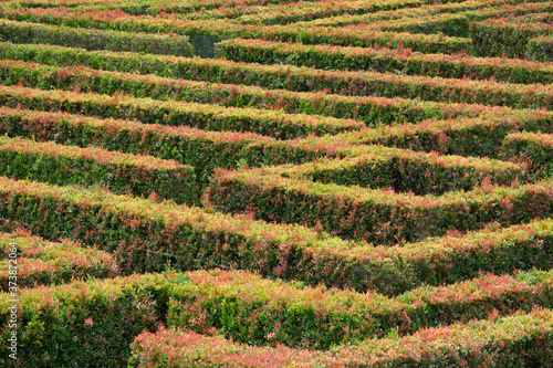 Obraz na plátně 18 january 2017,  Java, Indonesia: Maze Garden at Taman Bunga Nusantara, Java, I