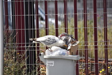 A Seagull Sitting On Rubbish S...