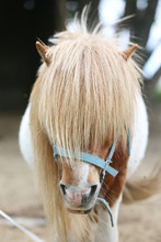 Beautiful Young Pony Horse  Wa...
