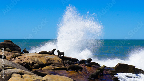 Fotografie, Obraz Mesmerizing view of Uruguay coast with sea lions