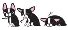 Boston Terrier Pups Awake And Sleeping. Vector Illustration.