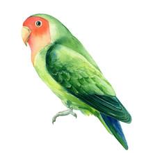 Tropical Bird Parrot Lovebirds...