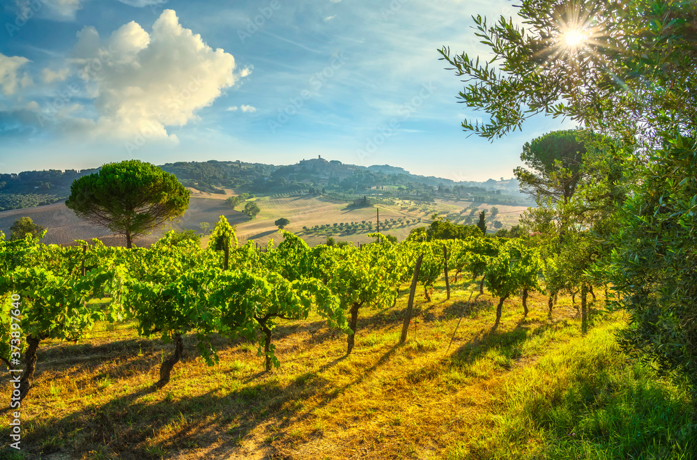 Casale Marittimo village and vineyards, landscape in Maremma. Tuscany, Italy.
