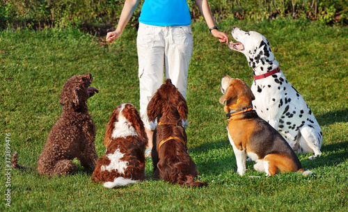 Fototapeta Dogs at the dog training school lesson obraz