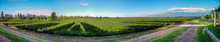 Panoramic View Of A Winery In ...
